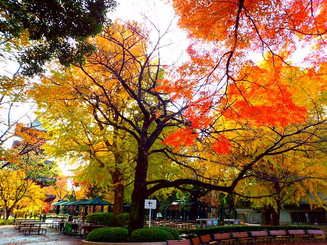 紅葉の季節(ビビッド盛り)