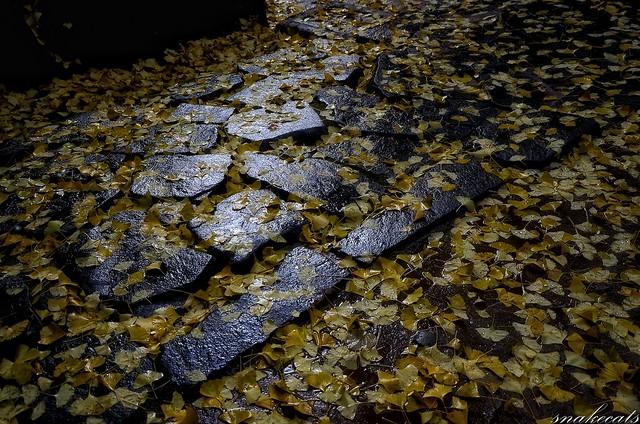 「銀杏絨毯」 室生寺 - 奈良
