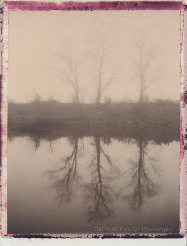 trees water fog landscape delaware polaroid250 polaroichocolate