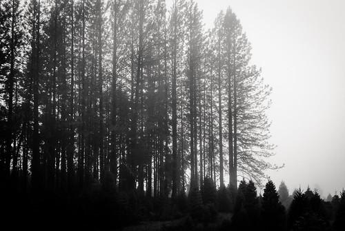 trees sky blackandwhite bw tree silhouette fog prime ridge 35mmf35