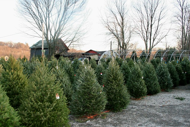 It's Beginning To Look A Lot Like Christmas ~ At Matarazzo's Farm
