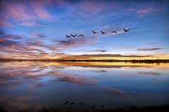 [フリー画像素材] 自然風景, 河川・湖, 朝焼け・夕焼け, 鳥類 (その他) ID:201212171200