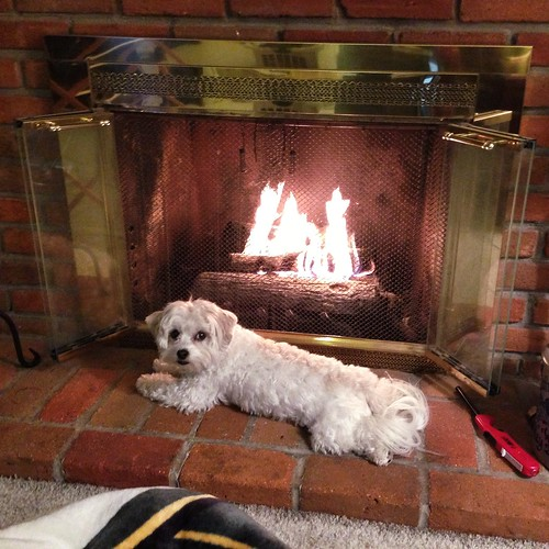 Toasty in front of the fire