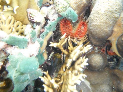 Beautiful coral located in Bocas del Toro, Panama
