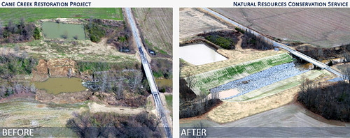 NRCS offered technical guidance for not only the stabilization of the creek bank and erosion control, but also the types of vegetation best suited for western Tennessee soils.