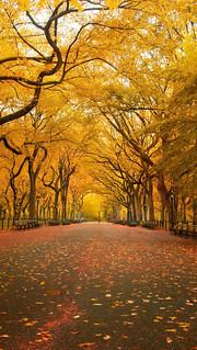 Yellow-Trees--iPhone-5