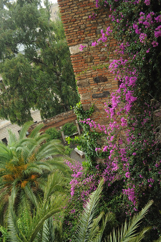 Flowers in the Alcazaba