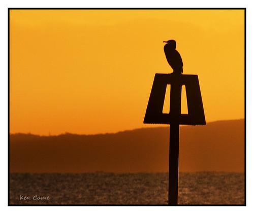 november silhouette sunrise head dorset cormorant hengistbury mudeford