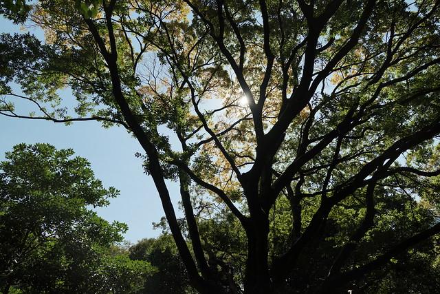 Hama-rikyu Gardens 1