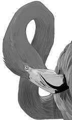 flamingo sketch
