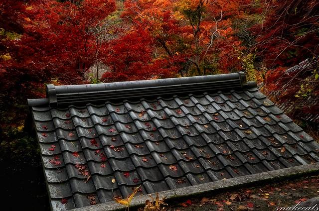 「紅葉降る」 長谷寺 - 奈良