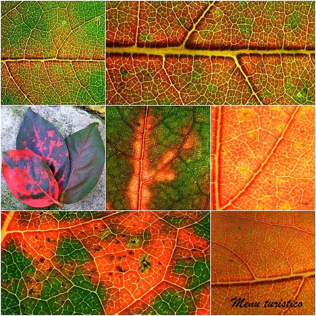foglie collage