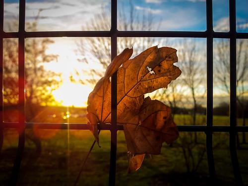autumn sunset sun fence leaf phone 365 lightroom 365project galaxys2