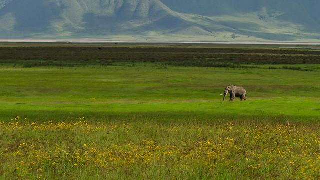 Elefante en el cráter del Ngorongoro, Tanzania.