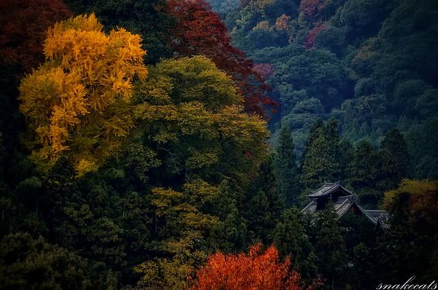 「時刻む光景」 長谷寺 - 奈良