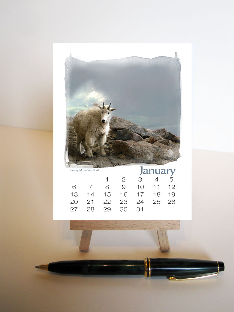 Denizens of the West Colorado Animal Calendar with Easel