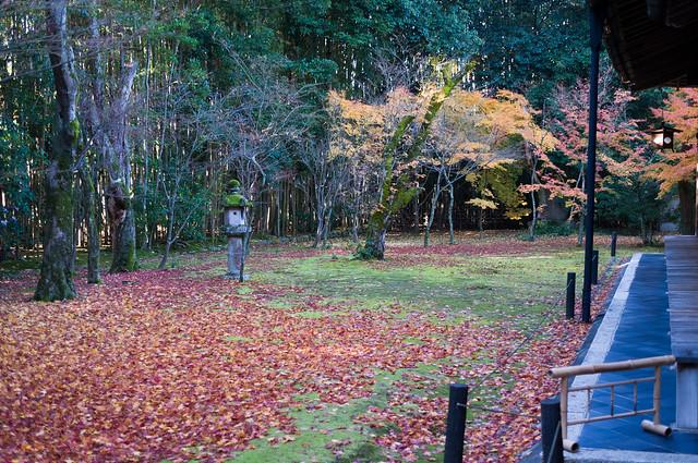 高桐院 楓の庭