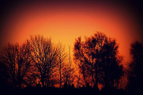 trees orange saint silhouette sunrise aidens