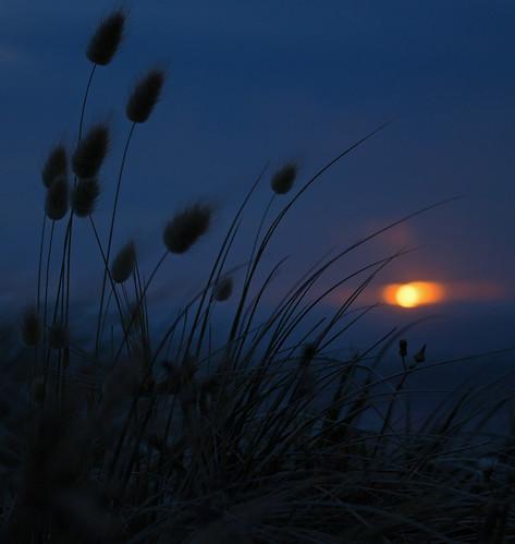 sunset beach grass night canon clear petone pancakelens 650d eos650d yourockwinner mygearandme mygearandmepremium mygearandmebronze gamesweepwinner ef40mmf28 rebelt4i