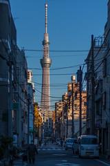 The Tokyo Sky Tree from Asakusa, Taito, Tokyo, Japan