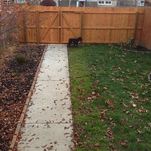 The fence and gate are now finished. Keeping prying eyes out and @TerryThePup in.