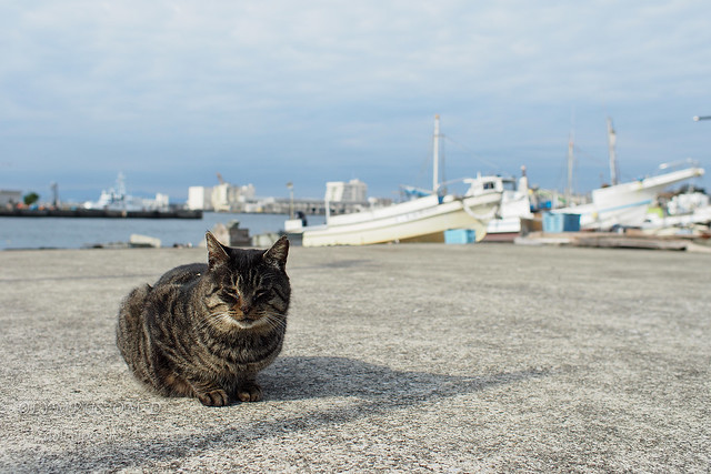 城ヶ島の猫たち