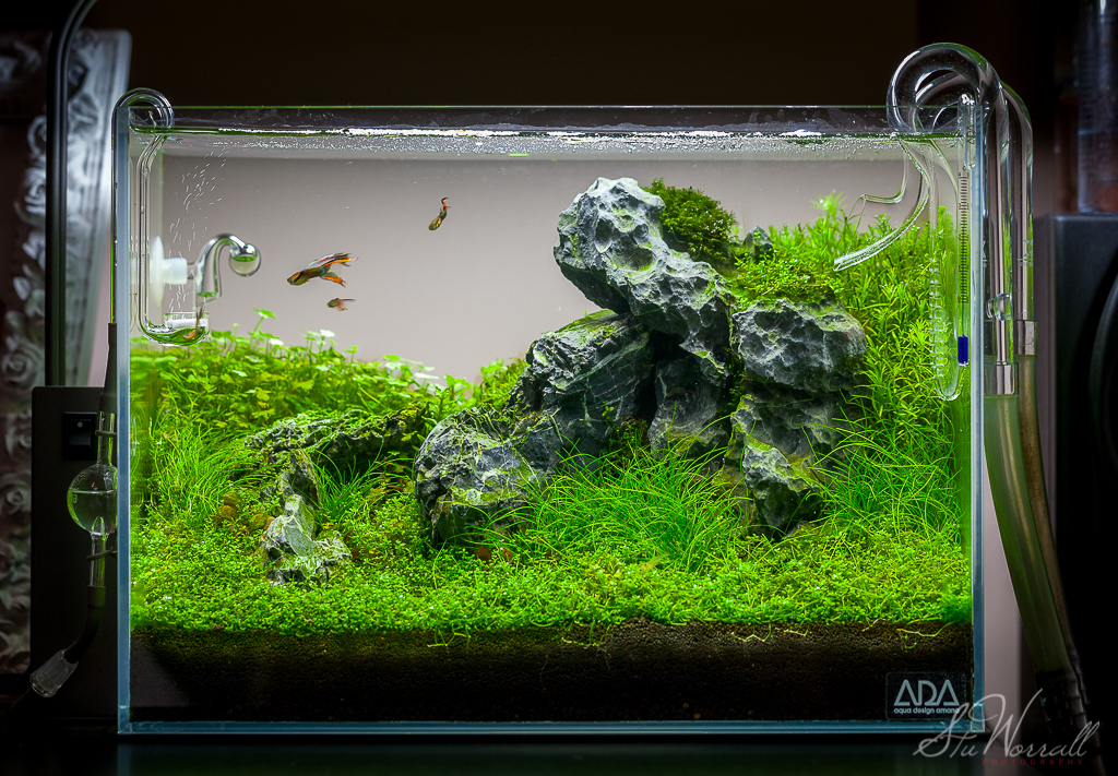 Stus ADA Mini m - Seiryu Stone AquaScaping World Forum