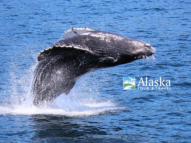 2012 Alaska Photo Contest