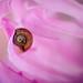 Pink Haven by Josh Liba