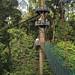 Canopy Walkway, Danum Valley (Dani Free)