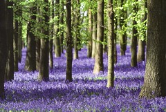 UK - Hertfordshire