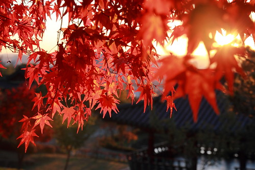 sunset plant tree fall nature leaves landscape cannon 대전 동형