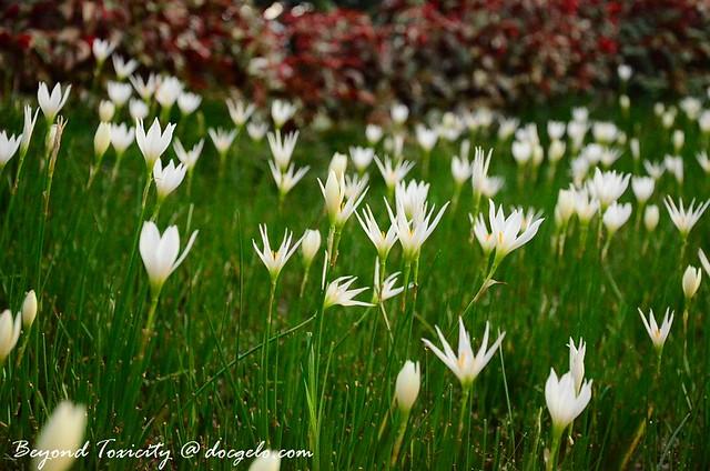 flowers at merdeka square kuala lumpur