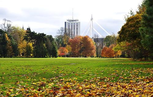 Autumn in Bute Park