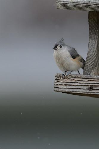 Bird_46379.jpg