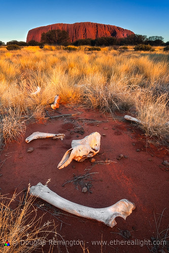 The boneyard. Scattered camel remains, Uluru, Australia by Douglas Remington - Ethereal Light™ Photography
