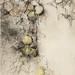 蘋果II.粉彩、水彩、木炭、紙本.73x54cm.2012