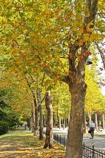 Istanbul pre-Autumn
