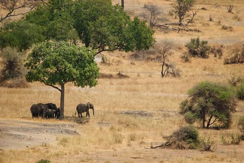 africa park travel shadow tourism landscape tanzania quiet wildlife peaceful safari ngorongoro national crater tiny elephants savannah arusha manyara tarangire