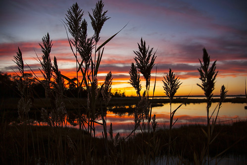 Sunset on the Marsh by RachelGouk