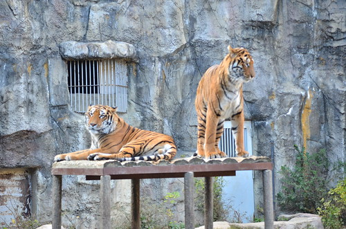 とべ動物園