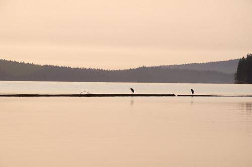 camping sunlight nature birds oregon sunrise unitedstates odelllake