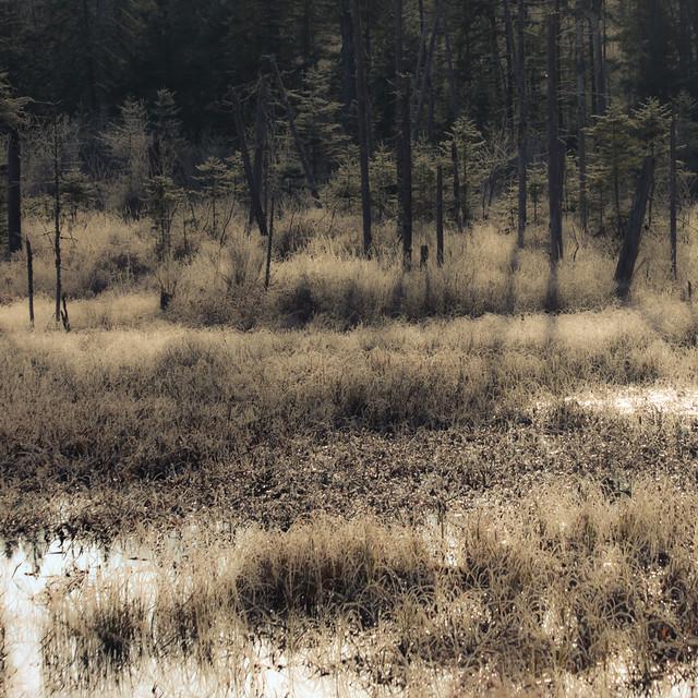 À l'orée du bois... j'écoute le mumure des herbes... le marais aux éclats...!!!