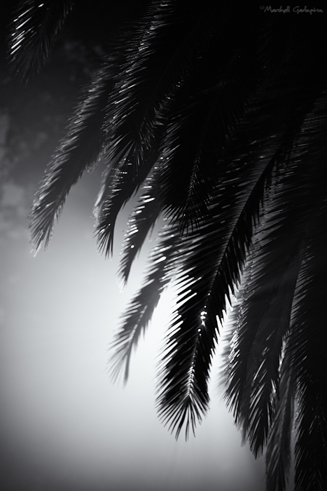 Foggy Palm 3