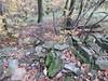 muschio e foglie secche