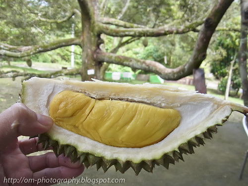 yummy durian, king of all fruits R0019808 copy