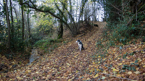 Dog waiting near the brook