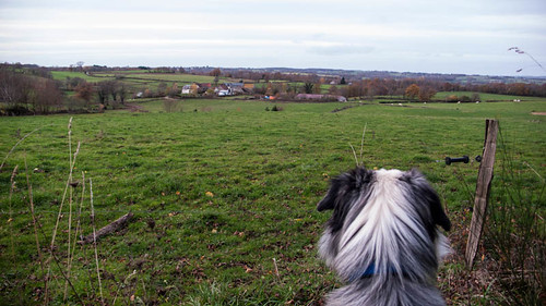 Dog watching the cows and the neighbouring village