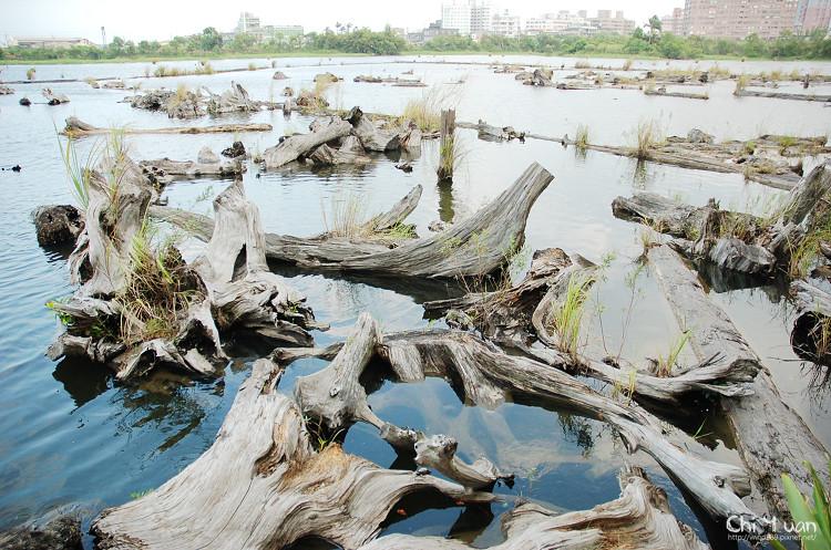 羅東林業文化園區-貯木池01.jpg