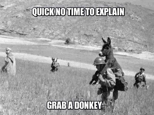 donkey by Jeff's people and stuff
